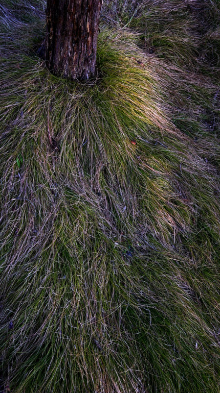 Grass photo by Jay Snively