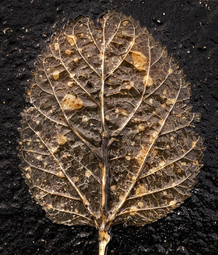 Leaf photo by Jay Snively