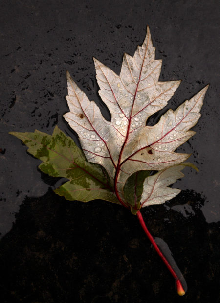 Natural World Leaves photo by Jay Snively