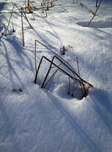 Weeds, snow, shadows photo by Jay Snively