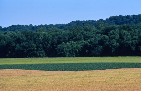 field, sparksville photo by Jay Snively