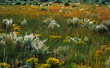 Arizona field photo by Jay Snively
