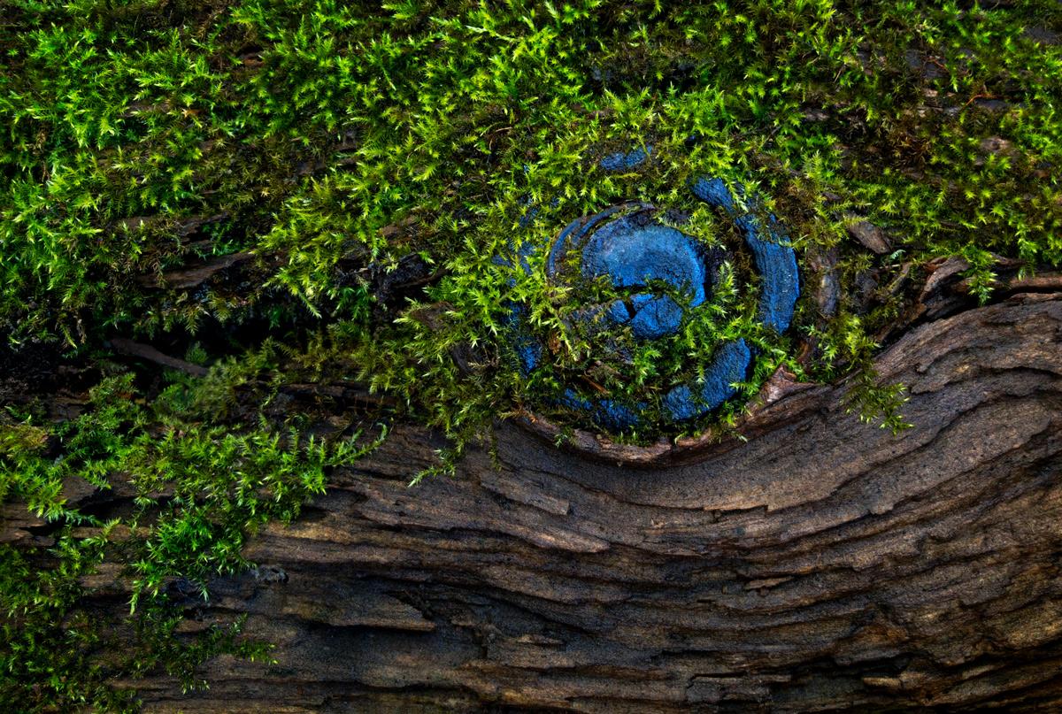 Blue Knot photo by Jay Snively
