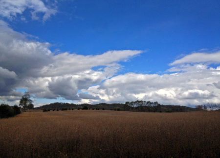 Wickerham Hill, beans, sky photo by Jay Snively