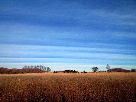 Bean Field, Sky photo by Jay Snively